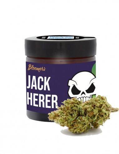 JACK HERER - Bloomers
