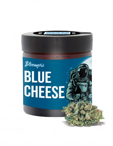 BLUE CHEESE - Bloomers