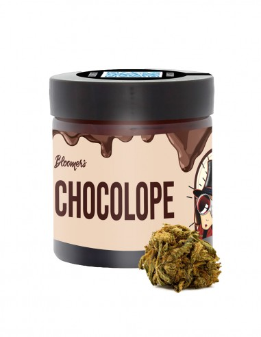 CHOCOLOPE - Bloomers